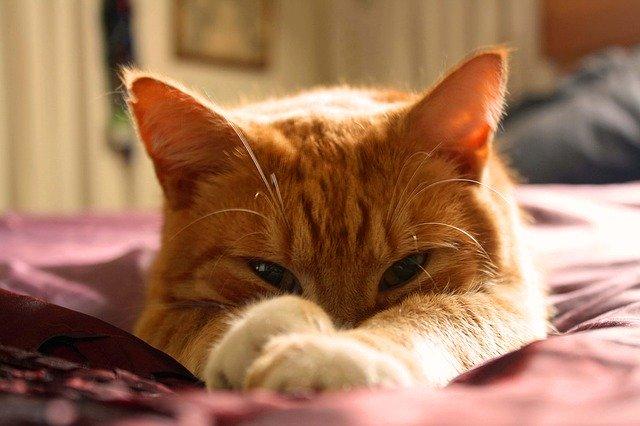 Ryšavá mačka leží natiahnutá na posteli s ružovou plachtou.jpg
